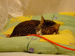 cat nap green red