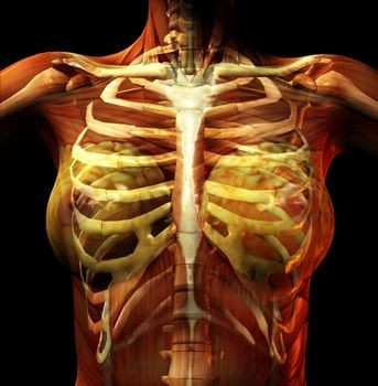 When Chest Pain Is Just Costochondritis Heart Sisters