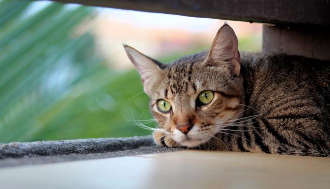 kittyWaiting
