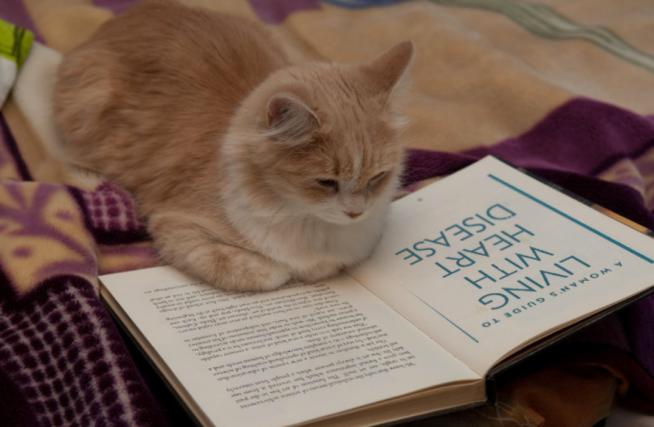 KittyReadingBook